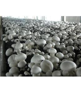 Мат для выращивания грибов PH TM 16 Glide+